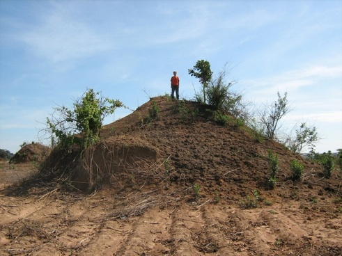 africa giant ant hill unusual