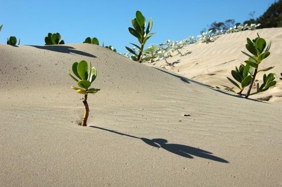 africa landscape desert