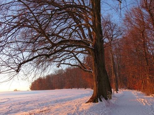 afterglow tree sunset