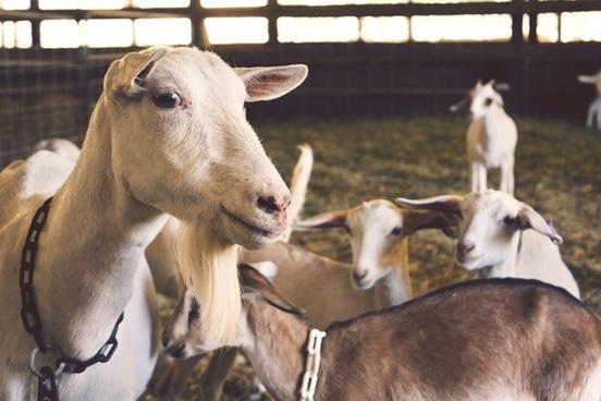 agriculture animal barn canine cattle cow curiosity