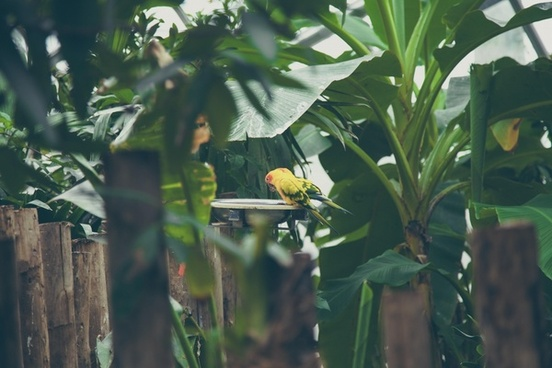 agriculture animal bird branch flower food fruit