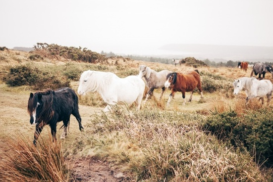 agriculture animal countryside cow desert domestic