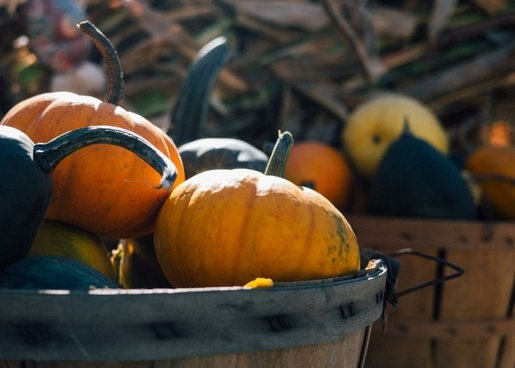 agriculture autumn basket daytime fall food fruit