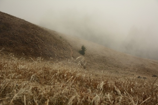 agriculture autumn daytime dust field fog grass