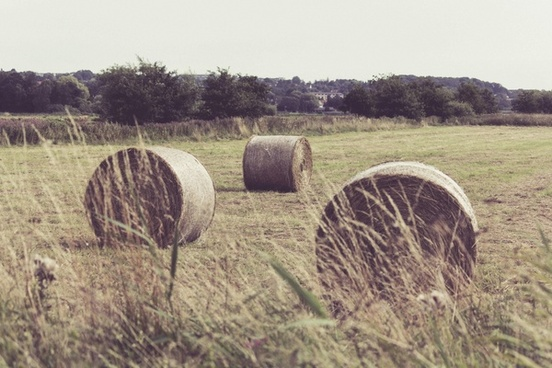 agriculture bale countryside crop cropland farm
