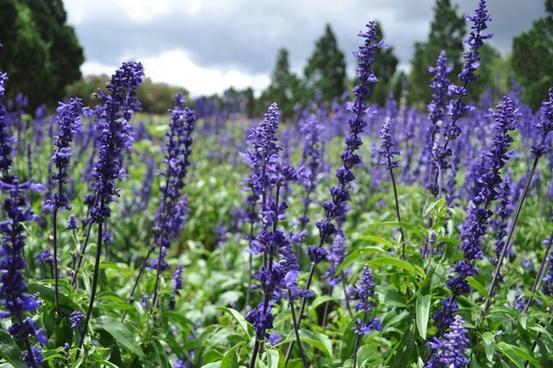 agriculture bloom blossom closeup color field flora