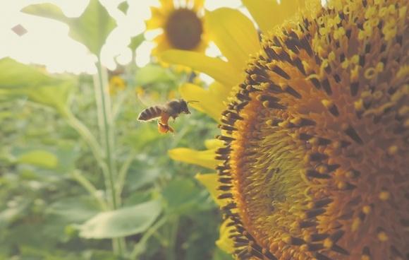 agriculture blur botany color detail flower garden