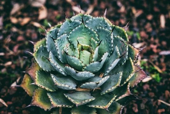 agriculture botany cactus daytime flower food garden