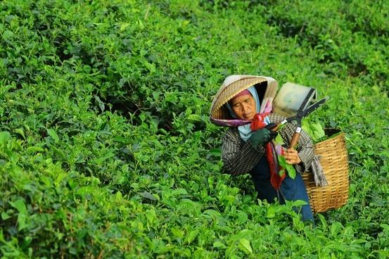 agriculture bush crop cropland farm field food