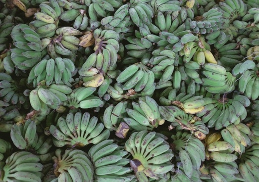 agriculture color detail exotic foliage food fruit