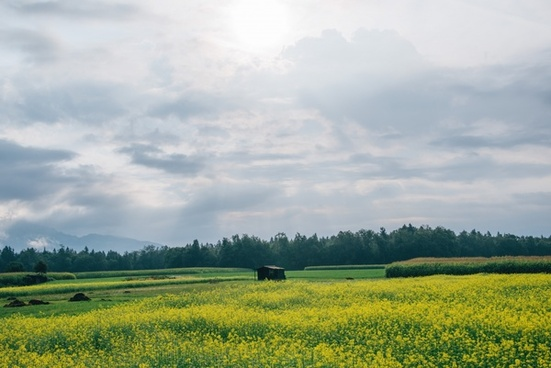 agriculture countryside crop environment farm field