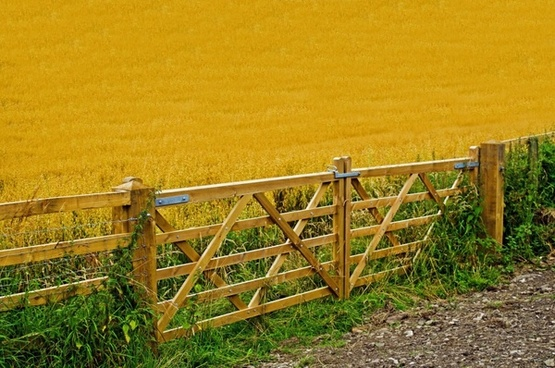 agriculture crop fence