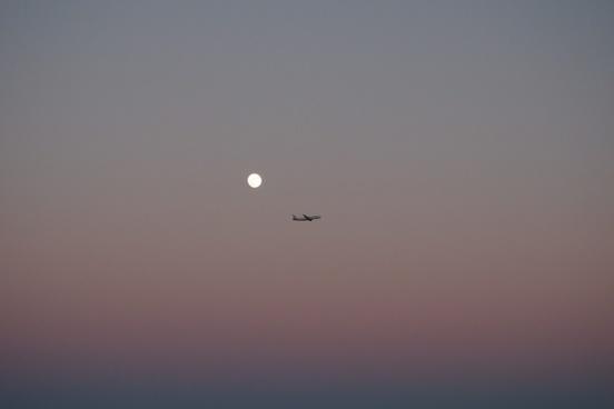 air aircraft airplane bird dusk evening flight