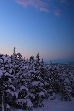 alaska bearvalley winter