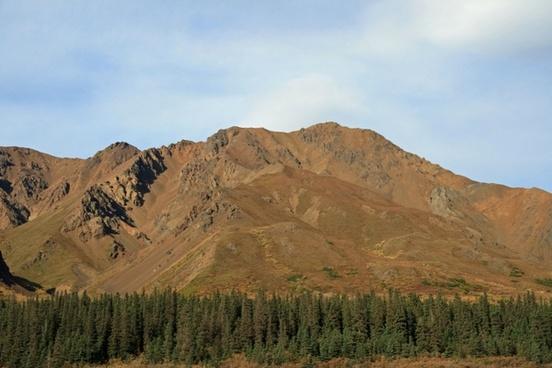 alaska forest wilderness