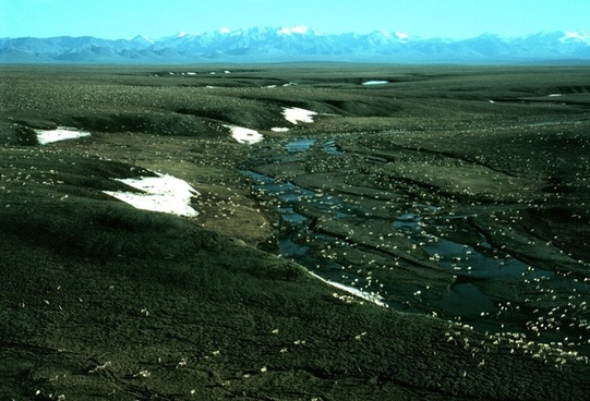 alaska landscape caribou