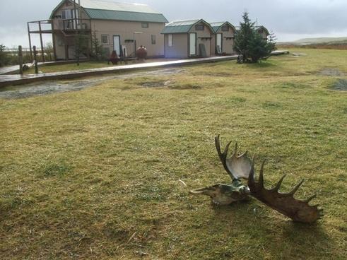 alaska moose-rack wilderness