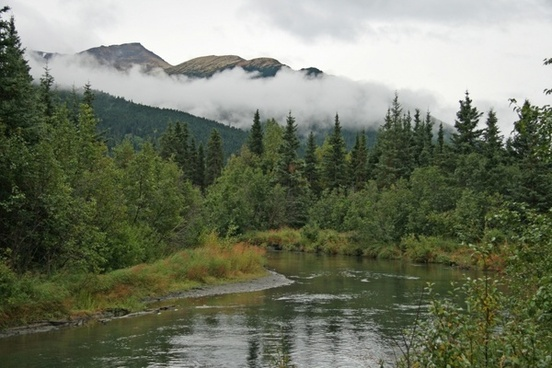 alaska wilderness forest