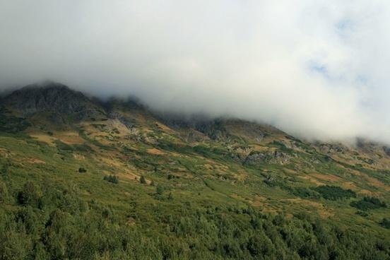 alaska wilderness forest