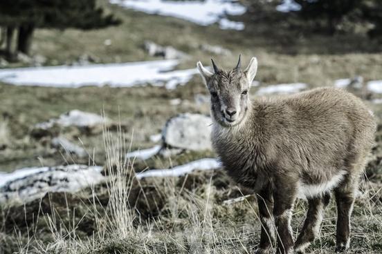 alert animal cute deer forest fur grass horn