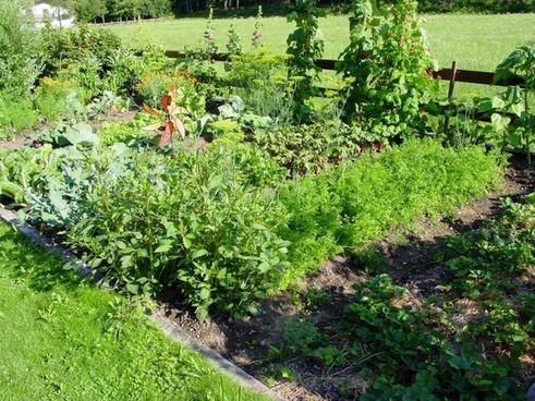 allotment garden beete
