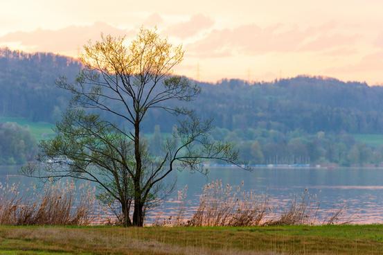 alone tree at the shore