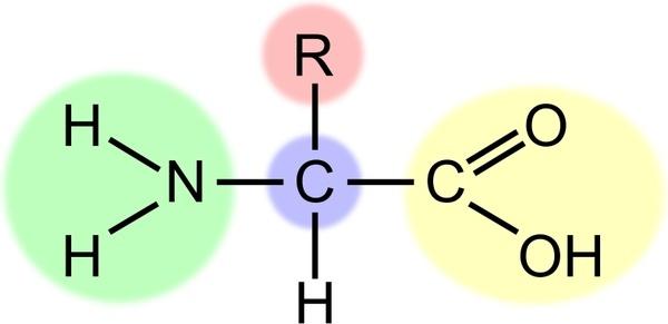 Amino acid (highlight)