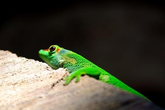amphibian animal branch chameleon color daytime