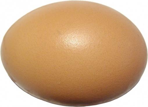 an eggshell protein