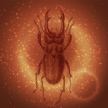 ancient beetle