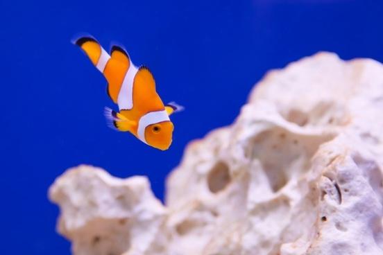 anemone animal aquarium