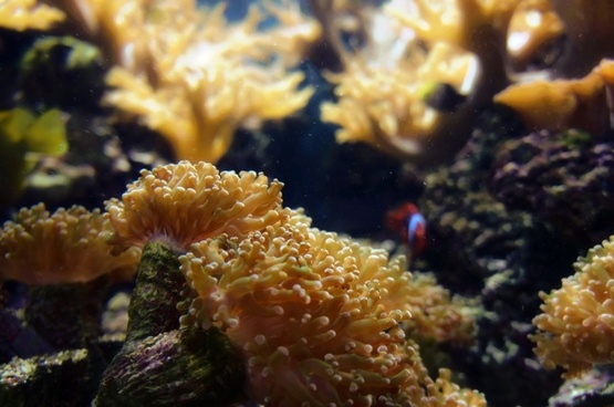 anemone underwater diving