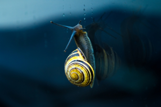 yellow snail climbing on wall