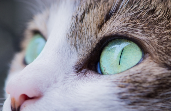 closeup of cat with green eyes