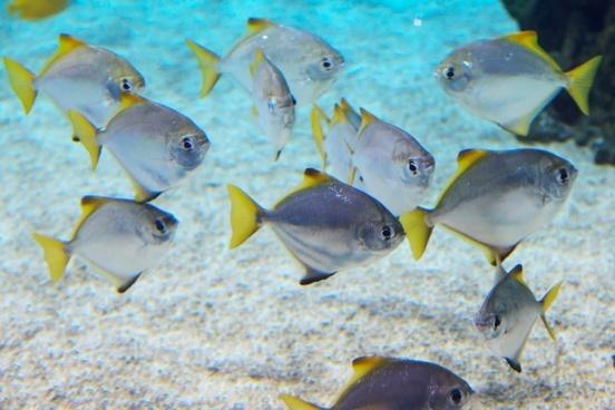 animal animals aquarium