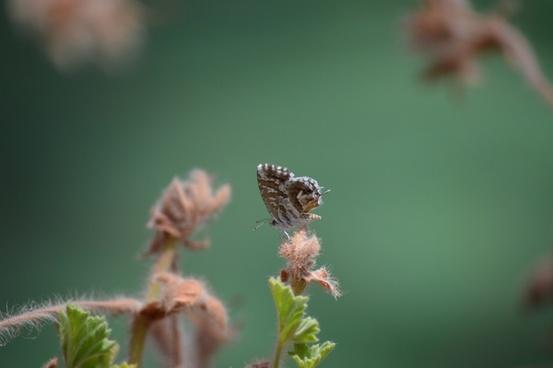 animal ant bee bug butterfly caterpillar dof flower