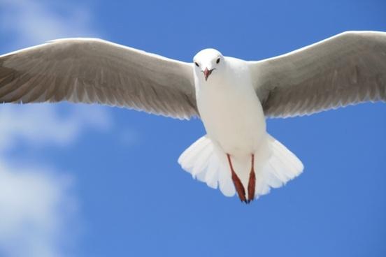 animal antarctica arctic beak bird egret feather