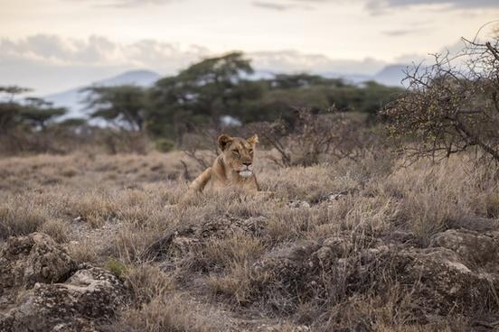 animal antelope cat cheetah coyote cub feline grass