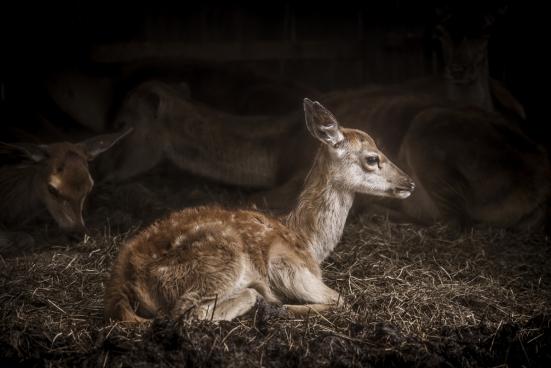 cute tiny deer lying on grass