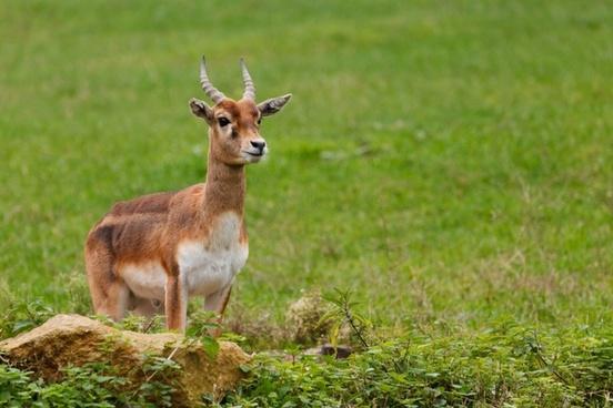 animal antlers background