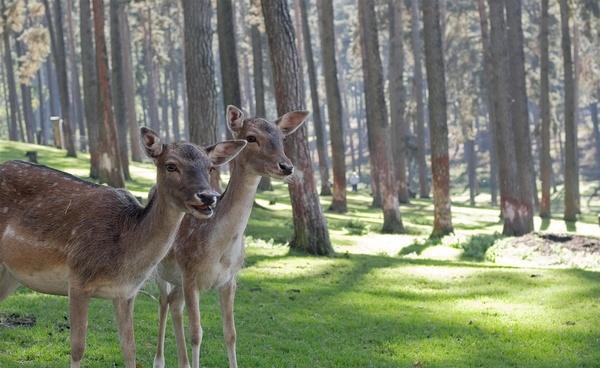 animal antlers deer environment field forest grass