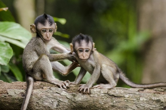 animal ape baboon baby conservation cute forest