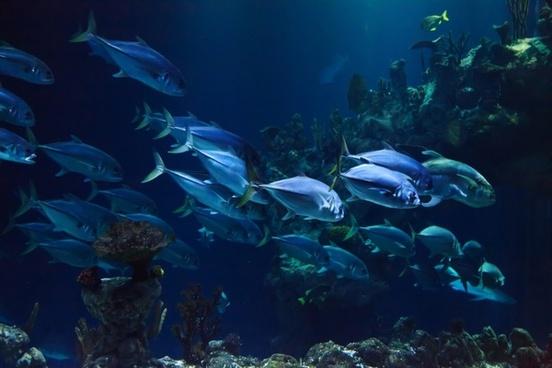 Aquarium Shrimp Free Stock Photos Download 201 Free Stock