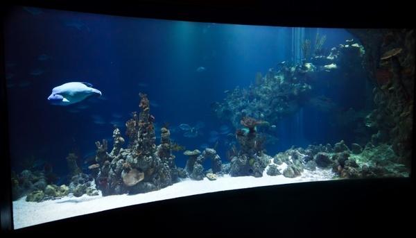 animal aquarium aquatic