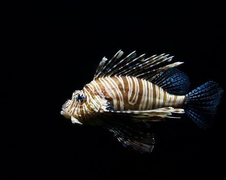 animal aquarium aquatic biology exotic fish