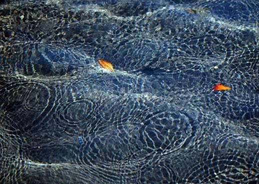 animal aquatic background biology color fish image