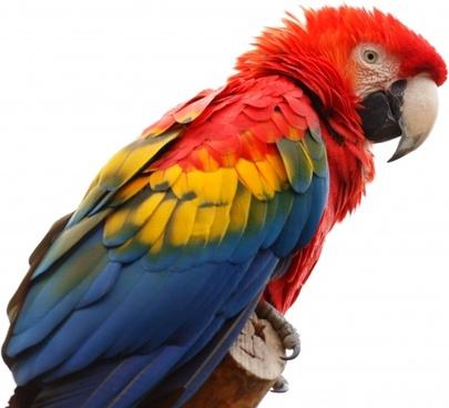 animal ara macao