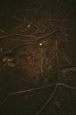 animal autumn background bird color dark daytime