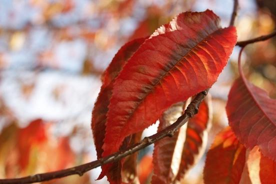 animal autumn bird blur bright color daytime