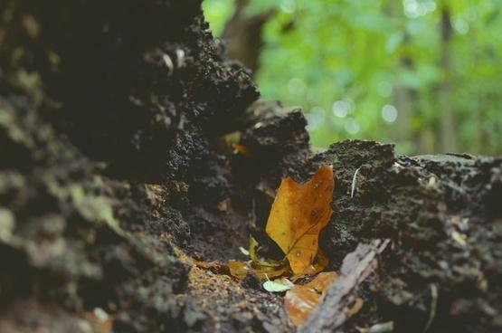 animal autumn bird blur daytime environment fall